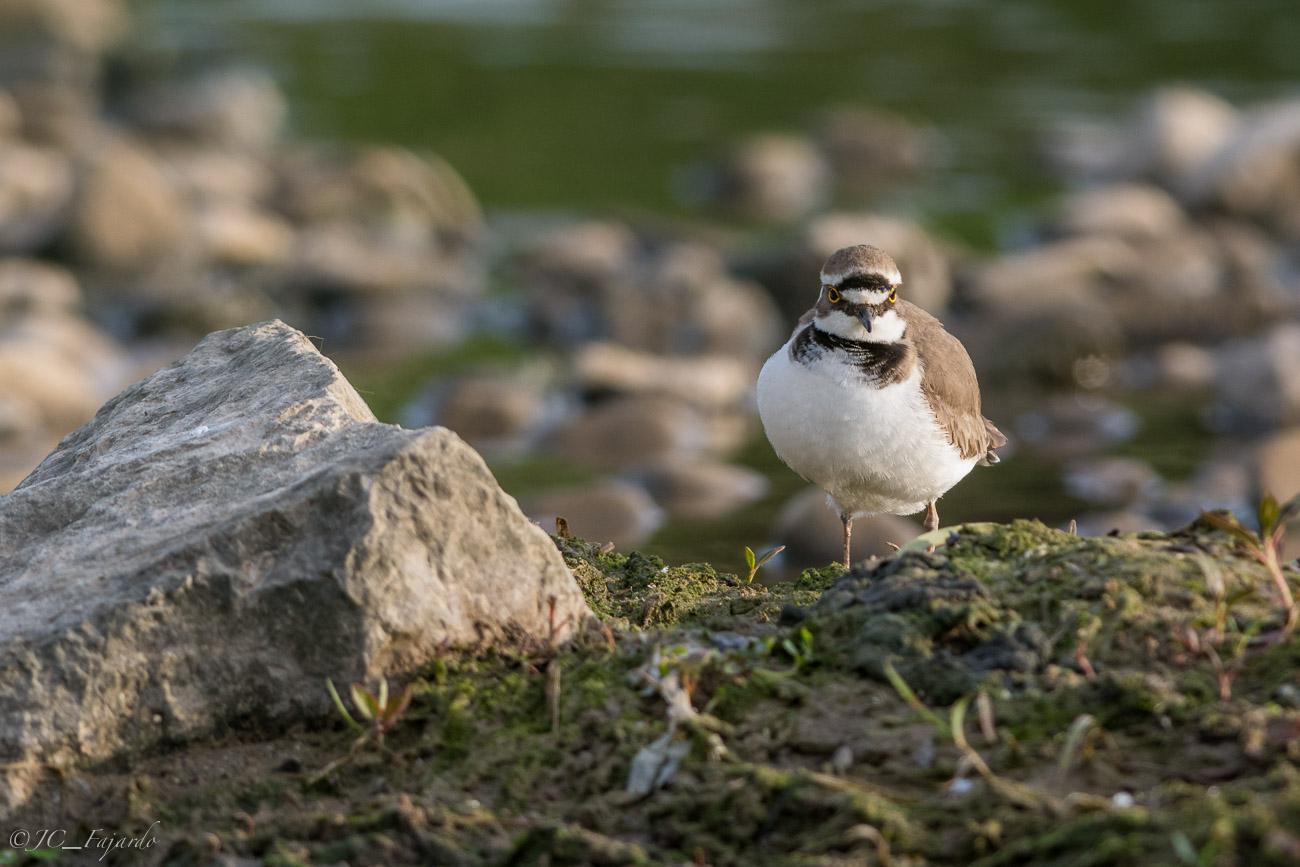 Desde la parte mas alta de la orilla controla que ningún otra ave se acerque
